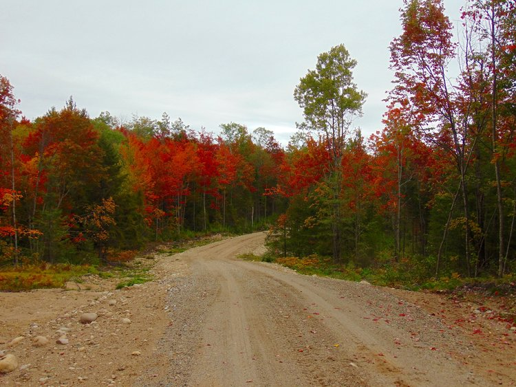 Adirondack Camp Land for Sale Bordering State Land