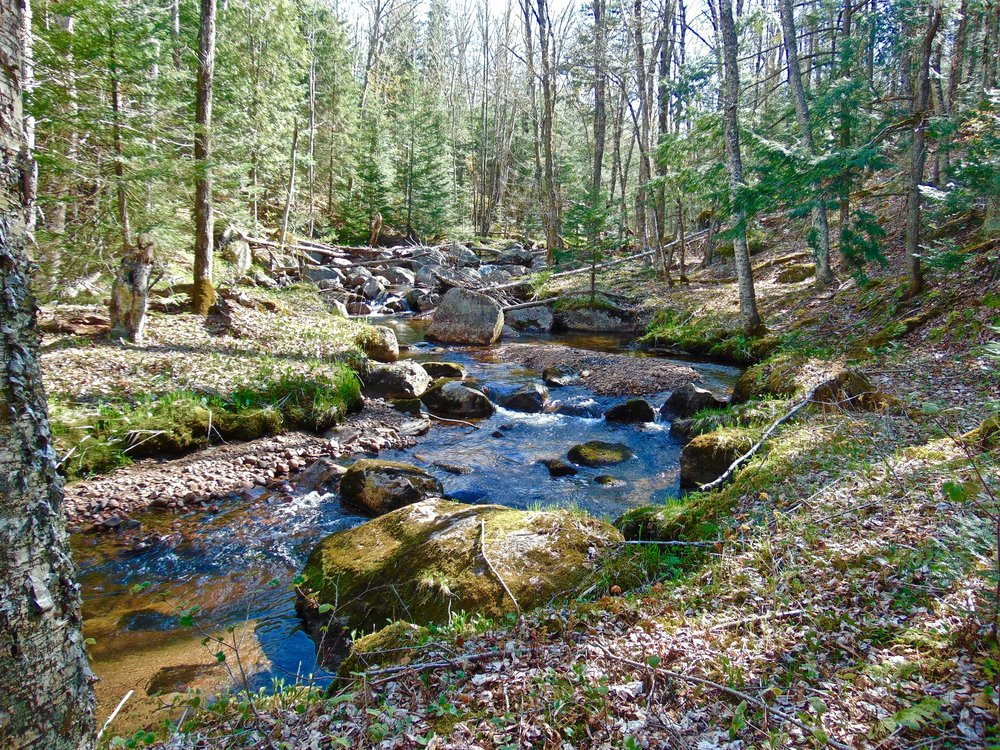 Prime Adirondack Land for Sale on Trout Stream