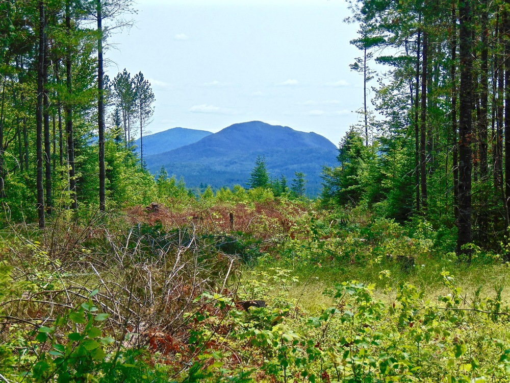 Adirondack Lot with Views for Sale