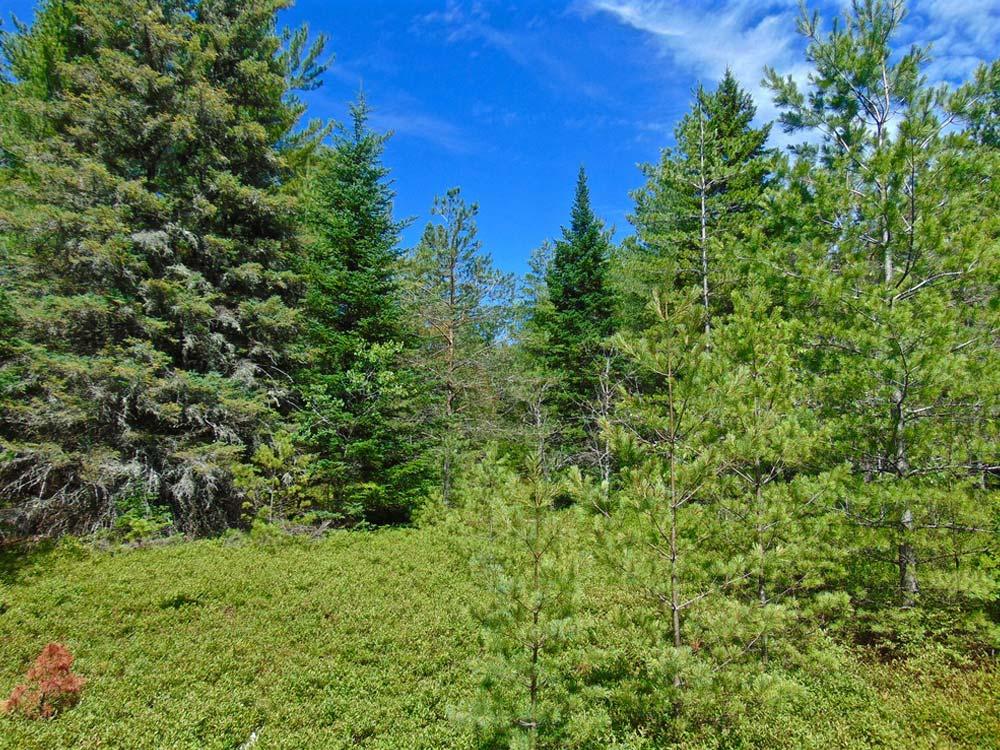 Lush Adirondack forest property