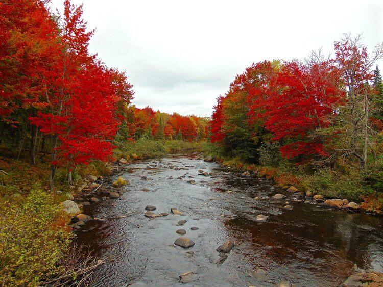 Stream in the Adirondacks during Fall