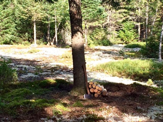 Adirondack property boarding 19 acres of state land