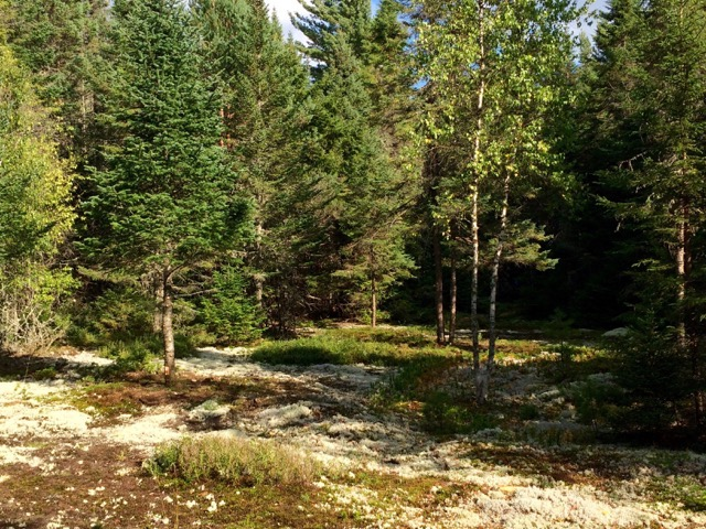 200,000 acres of state forest Adirondack property