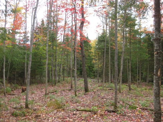 Land for Sale near in Owls Head