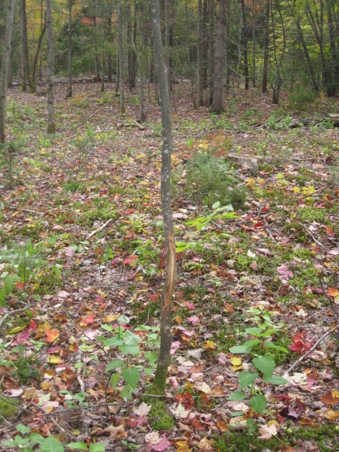 northern Adirondacks forest property