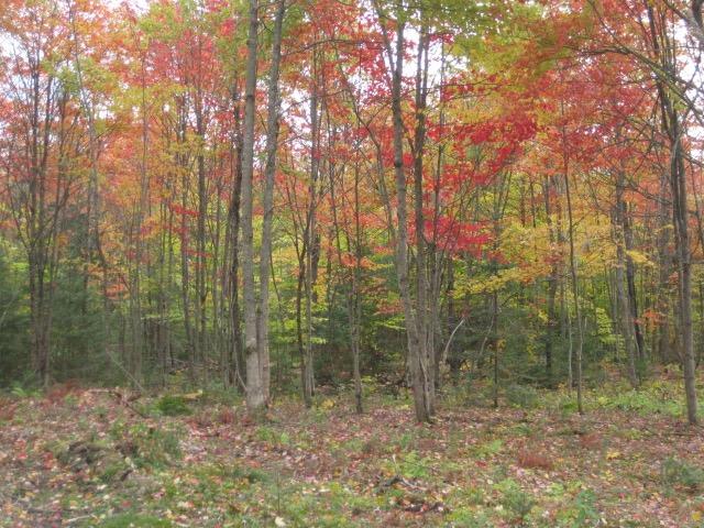 Foliage on property near Owls Head in Northern Adirondacks