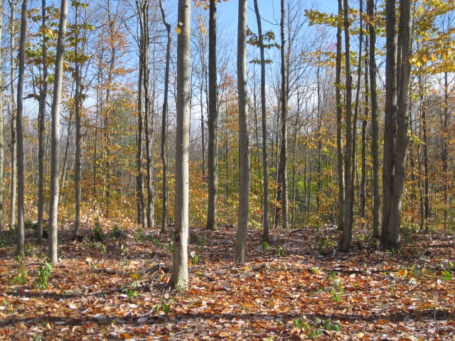 Adirondack Property For Sale