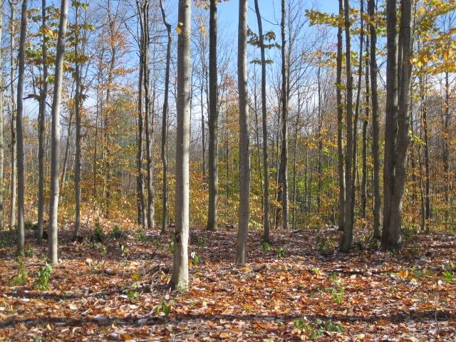 Adirondack woodland property