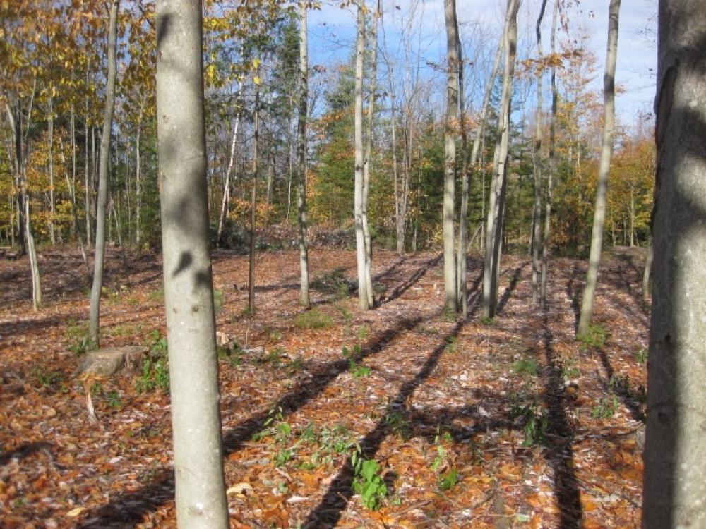 Ten acres of land in owls head