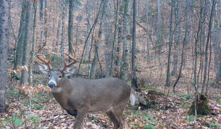 Hunting Deer in the Adirondacks