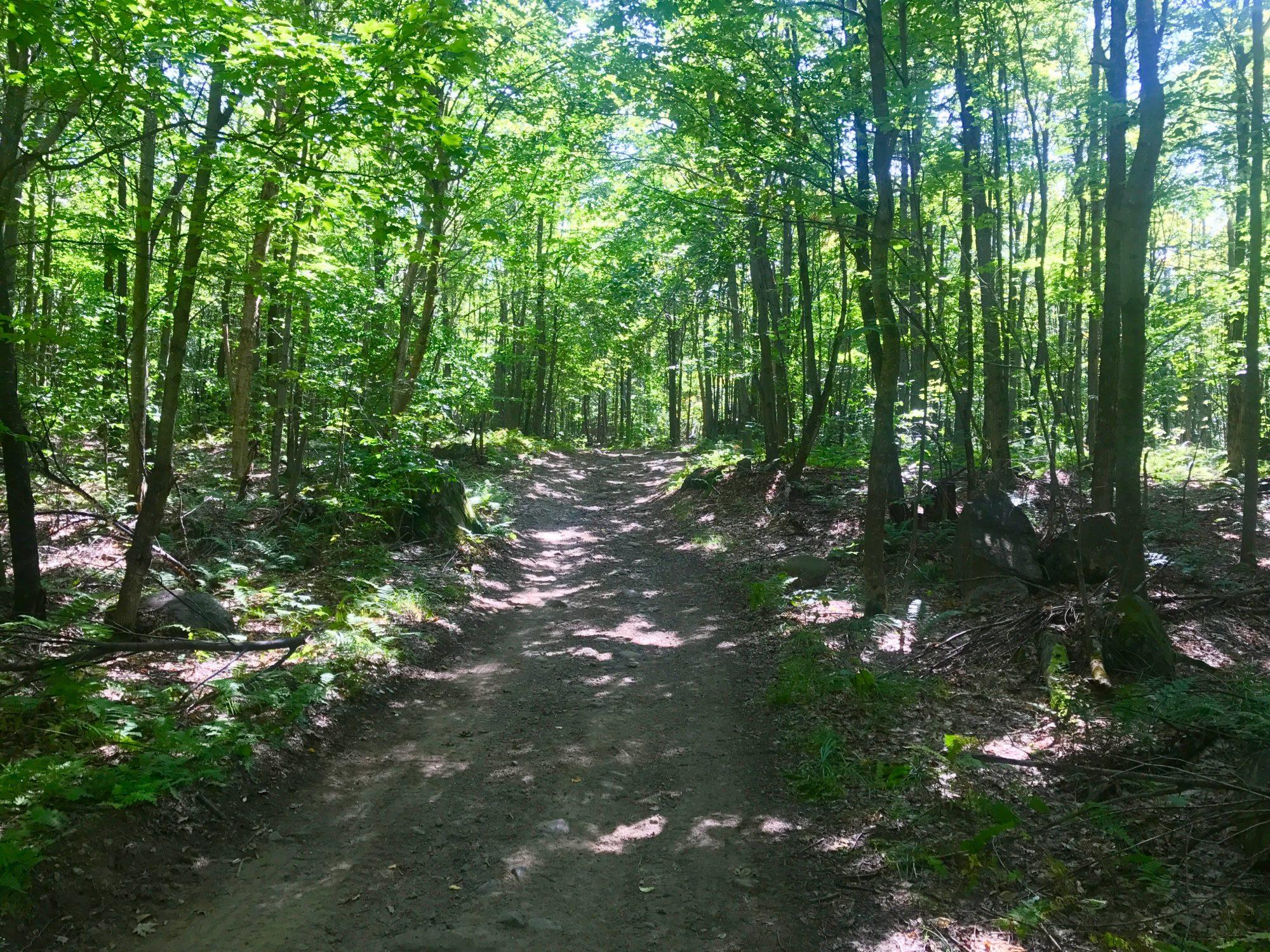 Adirondack Hunting Properties in Upstate New York