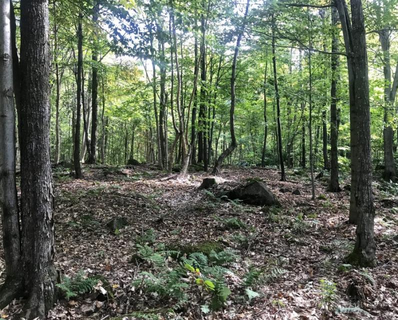 Adirondack hunting land