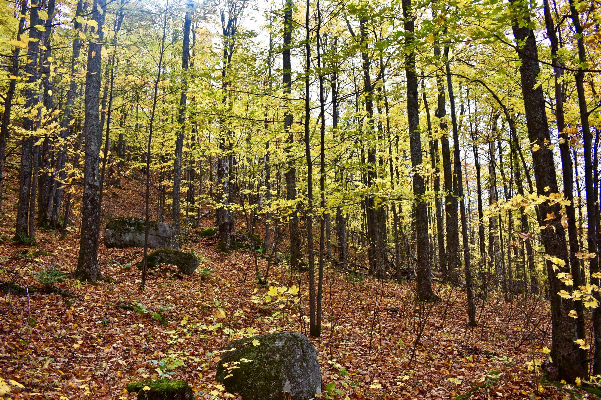 woodspg