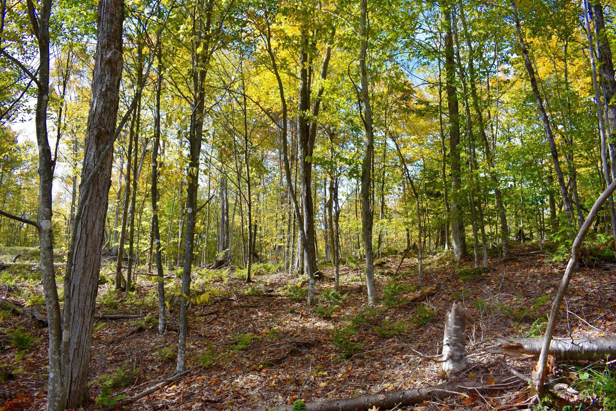 woods great