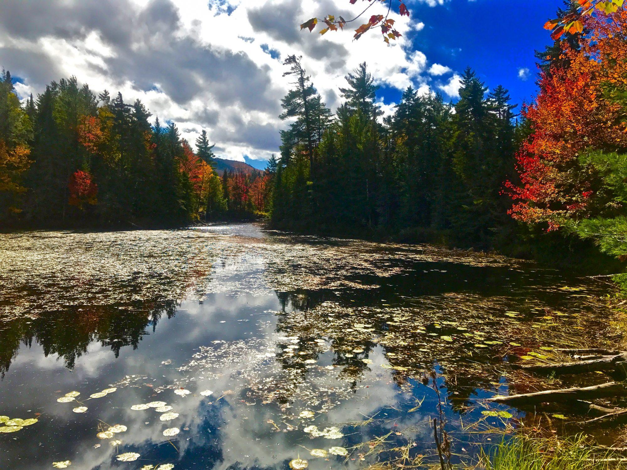 Fall- Pond-Pine