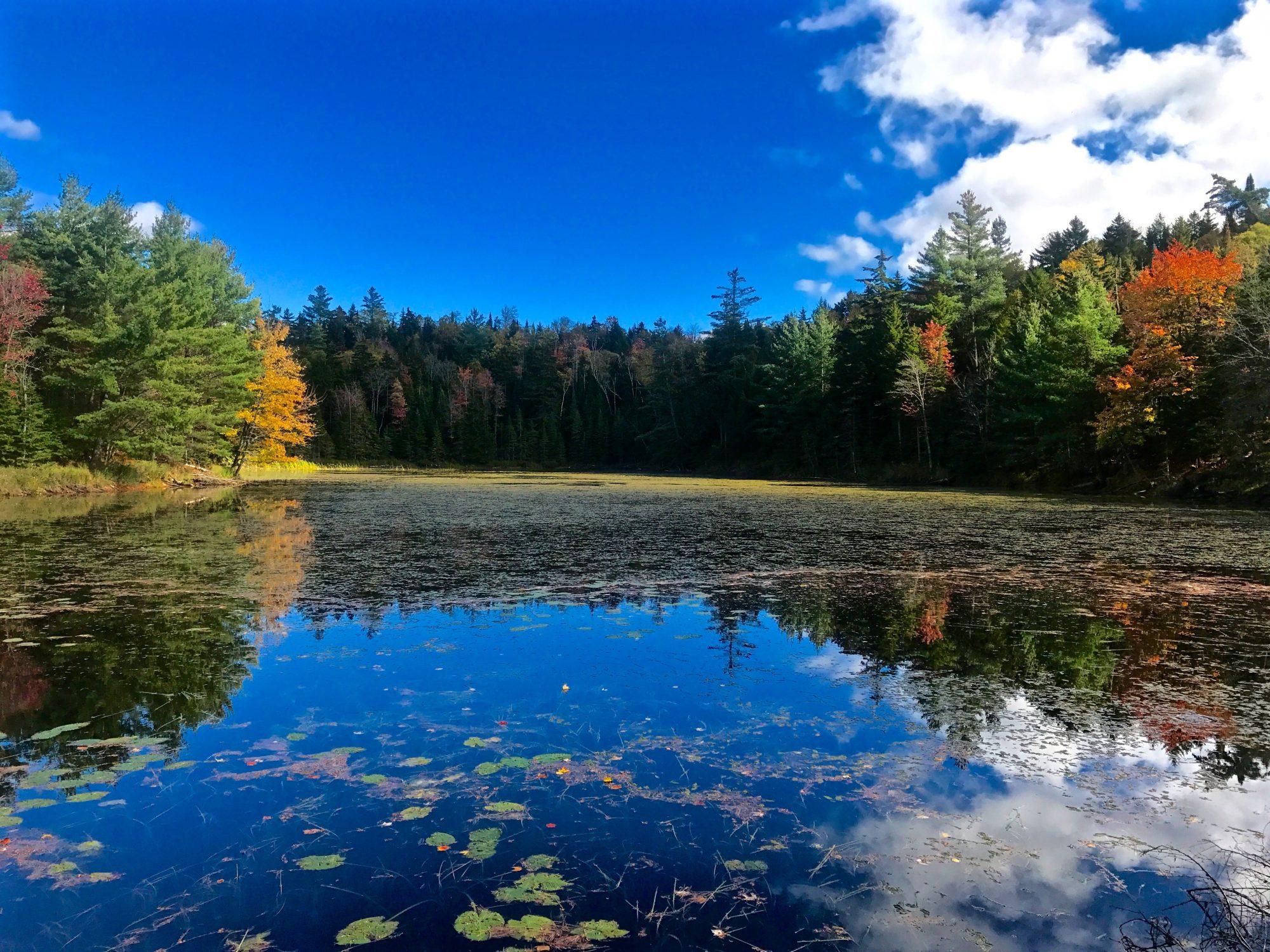 Fall-Pond nice