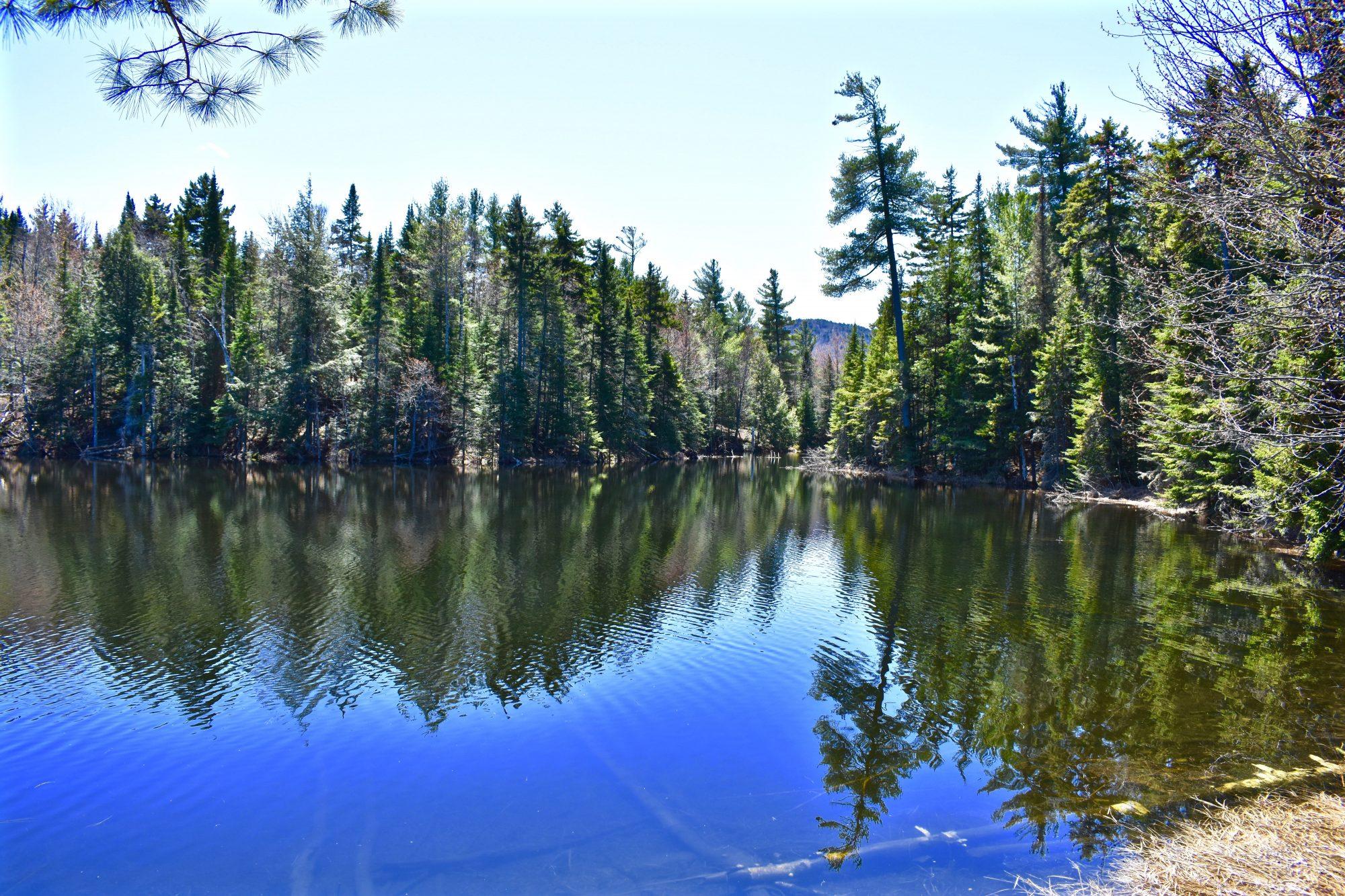 Pond- Pine good