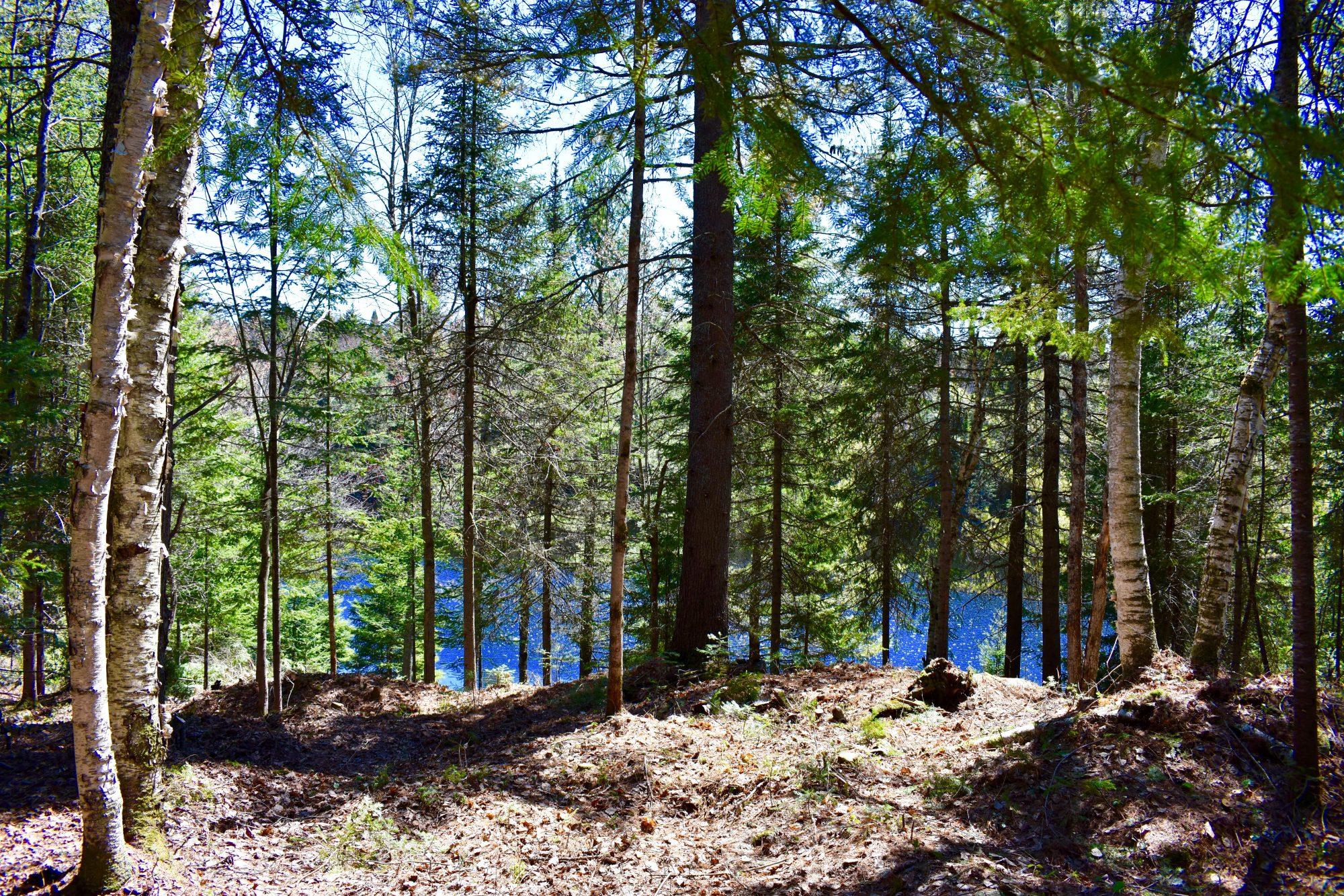 woods good
