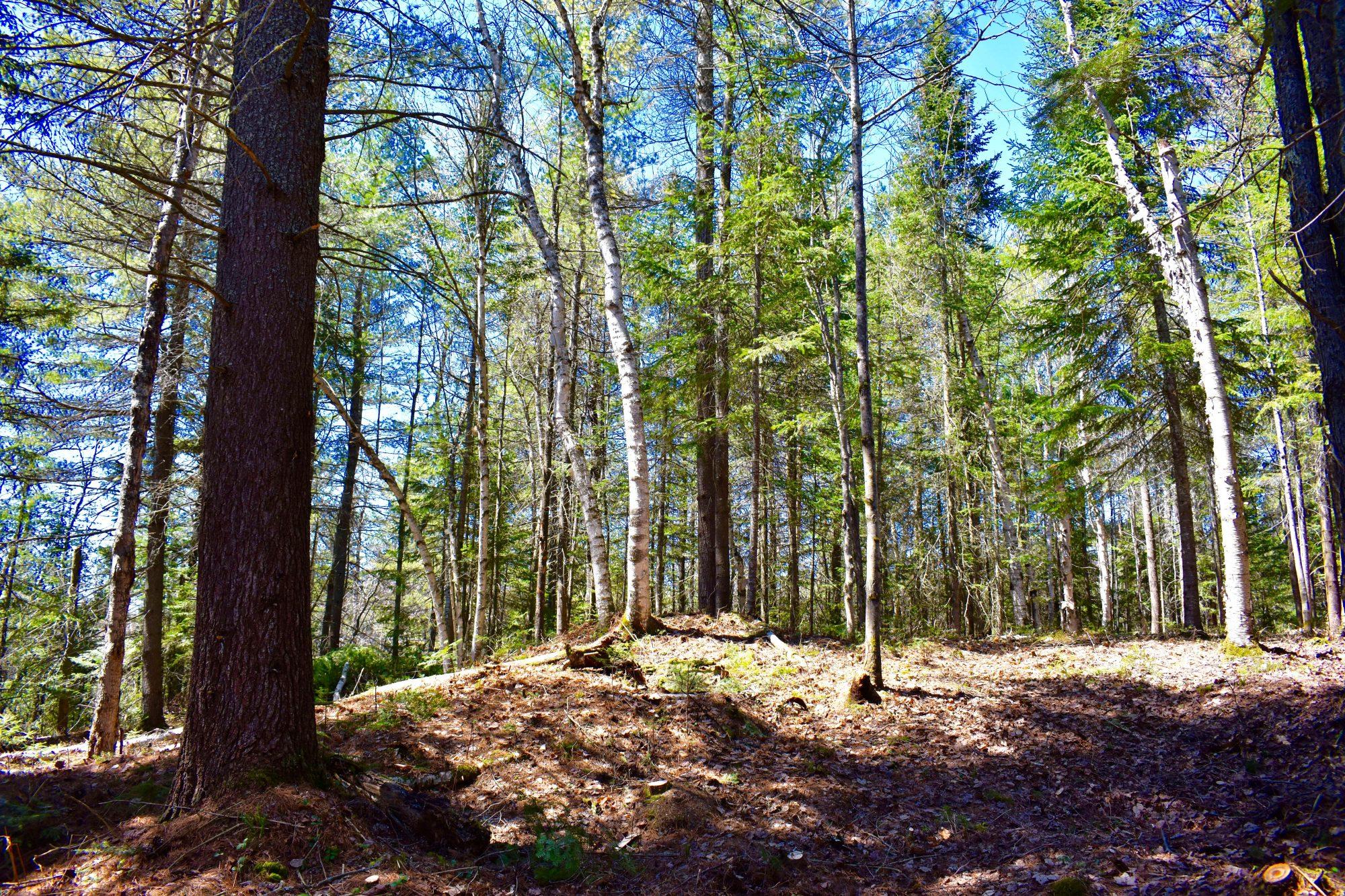 woods uphill