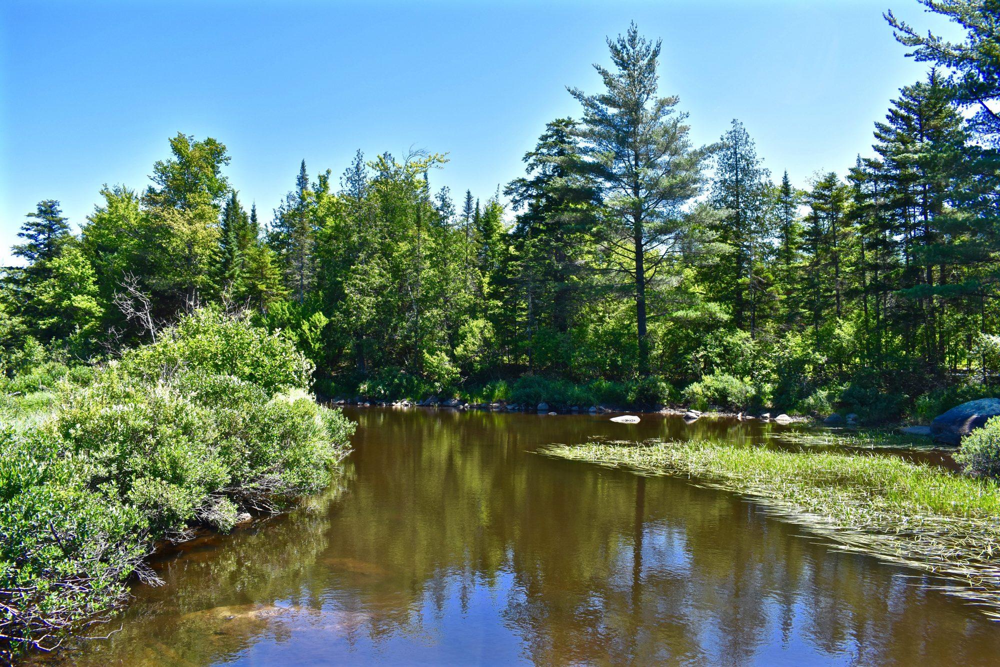 Brook- downstream
