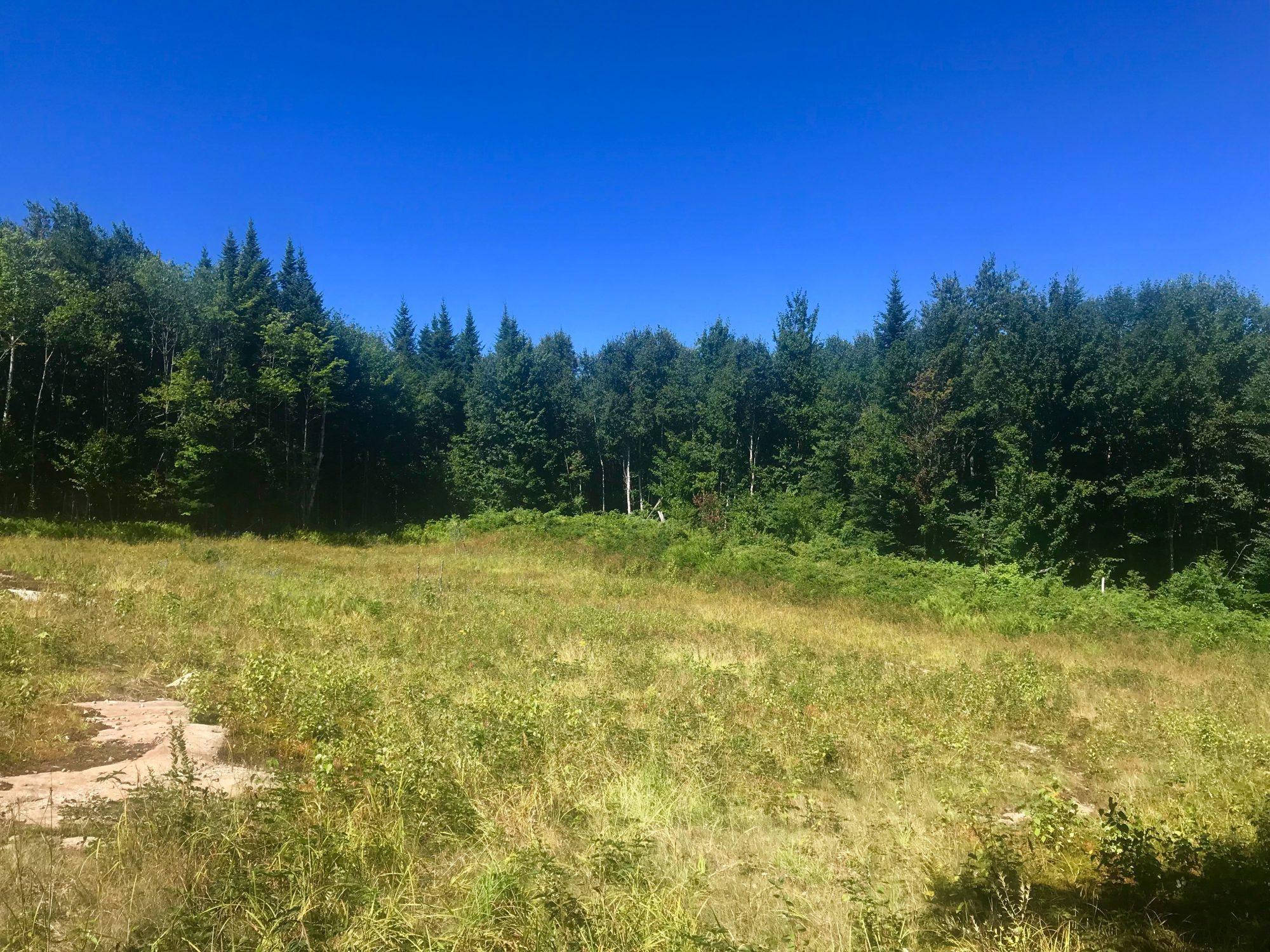 Meadow- Upper