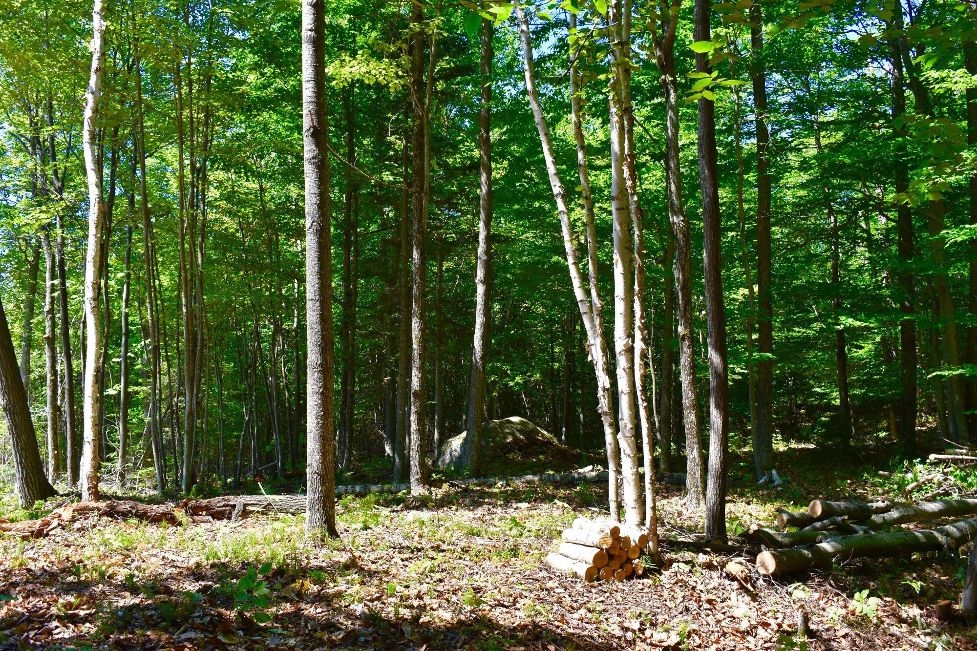 Woods nice