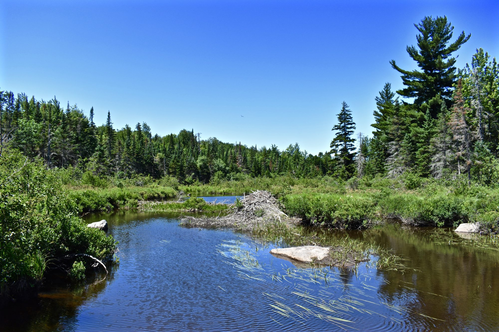 brook – upstream