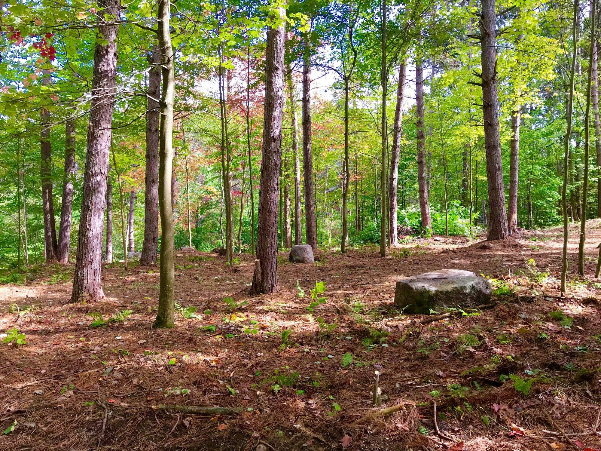 woods pretty