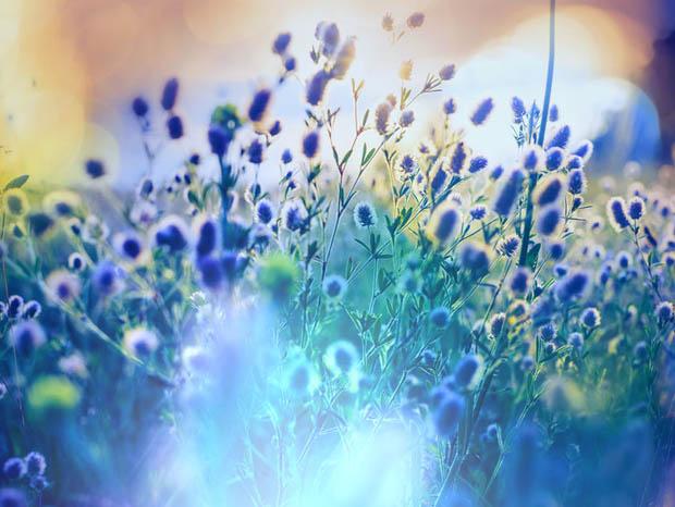 Sunshine shining on blue flowers