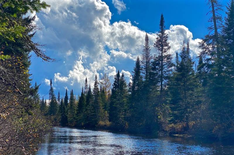 white clouds above evergreen trees