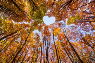 Fall trees with heart shaped space